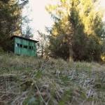 Opazovanje medveda v Loškem Potoku