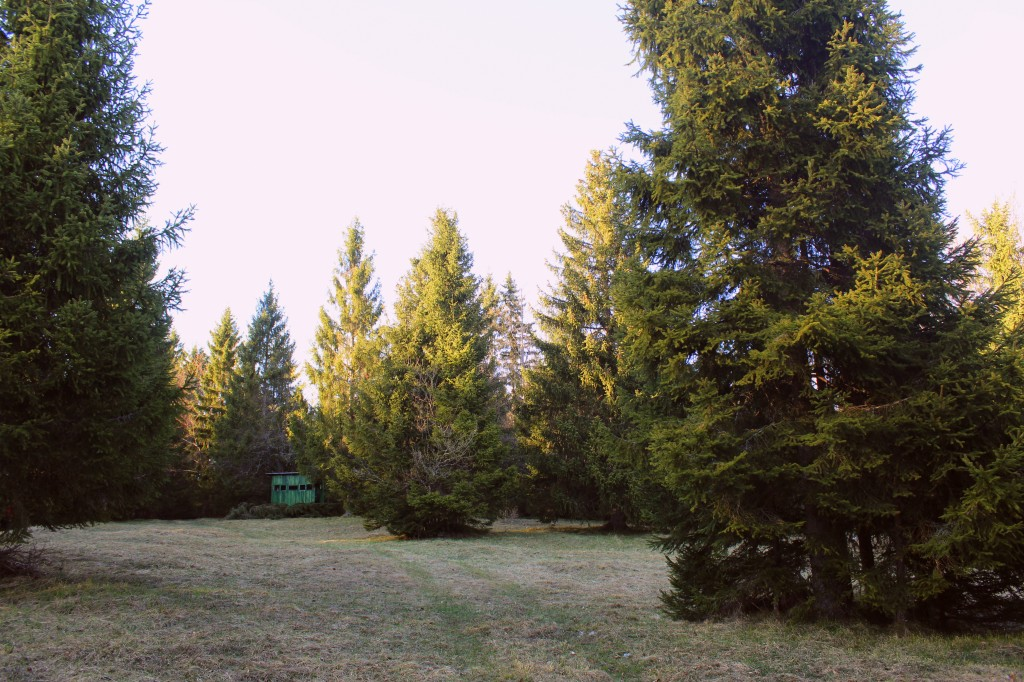 Opazovalnica v gozdovih Loškega Potoka