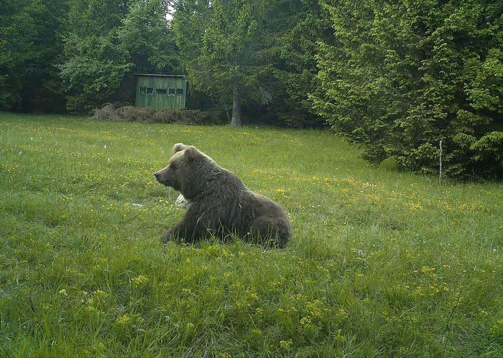 Medved Bobby