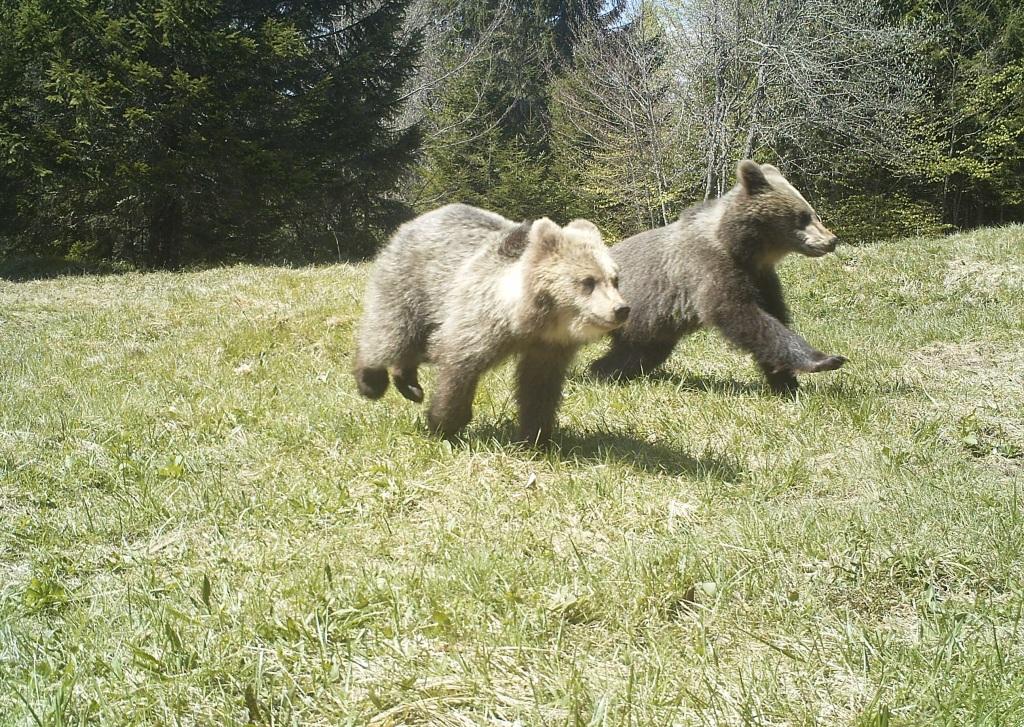 2-medvedka